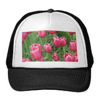 Fotografía floral de los tulipanes del tiempo de gorro de camionero