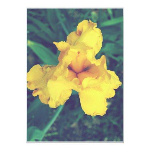 Fotografía floral del iris comunicados