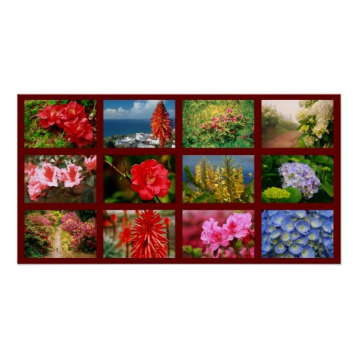 Fotografía floral póster