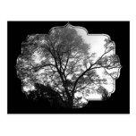 Fotografía fresca del árbol tarjeta postal