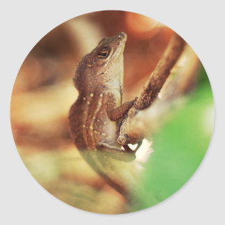 Fotografía fresca del lagarto pegatina redonda