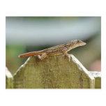 Fotografía fresca del lagarto tarjetas postales