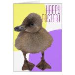 Fotografía gris adorable del anadón tarjeta de felicitación