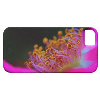 Fotografía hermosa de un cierre encima de color de iPhone 5 carcasas