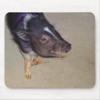 Fotografía hinchada pote divertido del cerdo alfombrilla de ratones