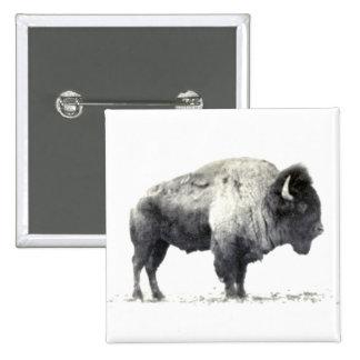 Fotografía histórica del bisonte americano pins