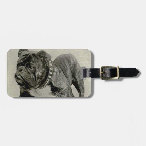 Fotografía inglesa del dogo del vintage etiquetas de equipaje