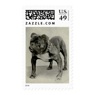Fotografía inglesa del dogo del vintage franqueo