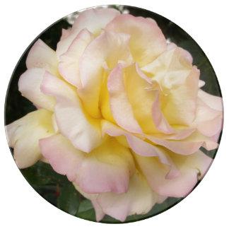 Fotografía inglesa rosada amarilla de los rosas platos de cerámica