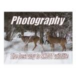 Fotografía, la mejor manera de tirar fauna postal