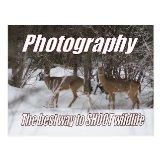 Fotografía, la mejor manera de tirar fauna tarjeta postal