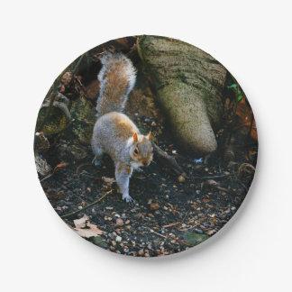 Fotografía linda de la ardilla, animal en bosque plato de papel de 7 pulgadas