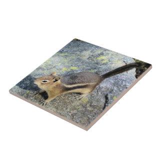 Fotografía linda de la fauna del roedor del Chipmu Azulejo Cerámica