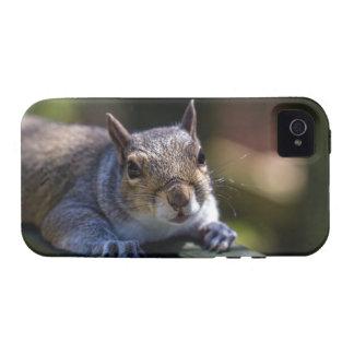 Fotografía linda de la naturaleza de la ardilla de Case-Mate iPhone 4 carcasas