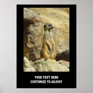 Fotografía linda del meerkat poster