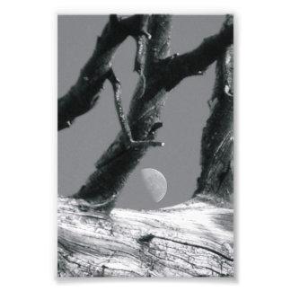 Fotografía M7 4x6 blanco y negro de la letra del a