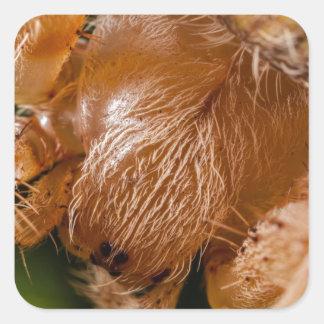 Fotografía macra extrema de una araña marrón pegatina cuadrada