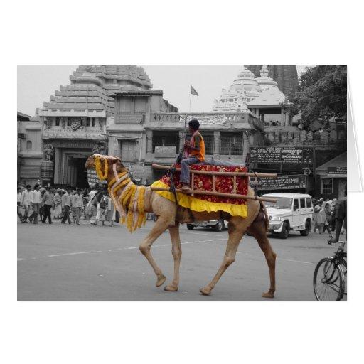 fotografía Mano-coloreada del camello en Orissa, l Felicitaciones