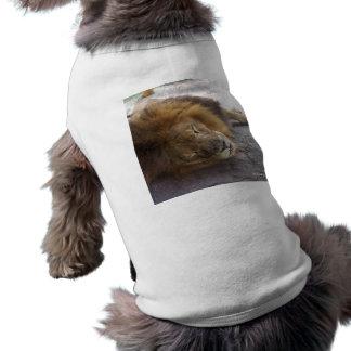 Fotografía masculina de la opinión de la cabeza de playera sin mangas para perro