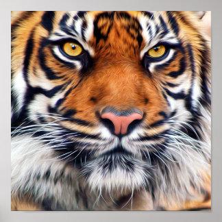 Fotografía masculina de la pintura del tigre siber poster