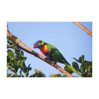 Fotografía moderna del pájaro de la bella arte de impresión en tela