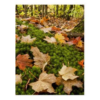 Fotografía mojada del piso del bosque del otoño postal