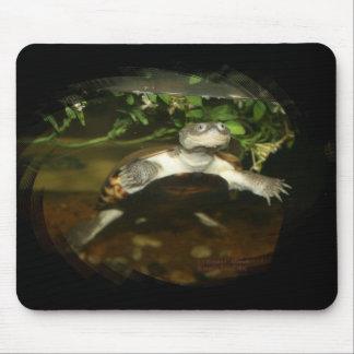 Fotografía Necked lateral africana de la tortuga Alfombrillas De Ratón