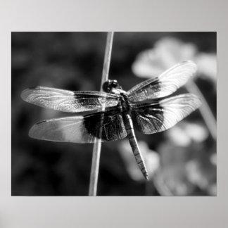 Fotografía negra y blanca de la libélula de la póster