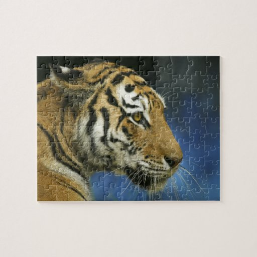 Fotografía oblicua del primer del tigre rompecabezas