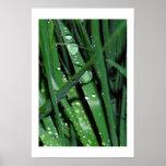 Fotografía original de las gotas de lluvia en hier posters
