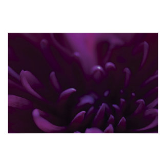 Fotografía púrpura de la flor póster