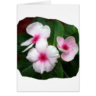 Fotografía púrpura de las flores de molinillo de tarjeta pequeña