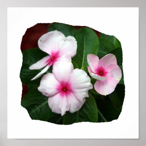 Fotografía púrpura de las flores de molinillo de v posters