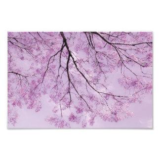 Fotografía púrpura del árbol de la lavanda cojinete