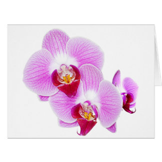 Fotografía radiante del primer de la orquídea tarjeta de felicitación grande