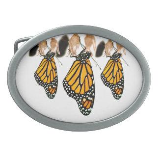 Fotografía recién nacida de la mariposa de monarca hebilla de cinturón oval