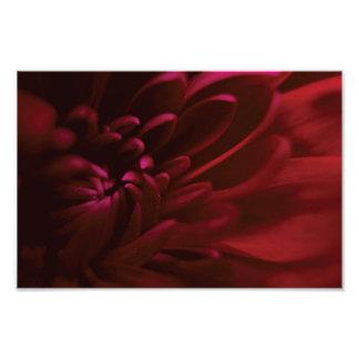 Fotografía roja de la flor