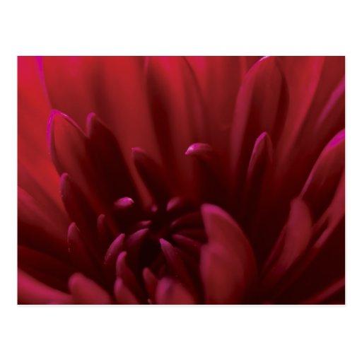Fotografía roja de la flor tarjetas postales