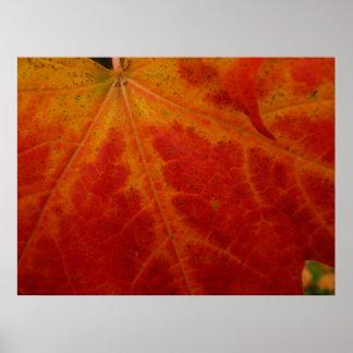 Fotografía roja de la naturaleza del otoño del póster