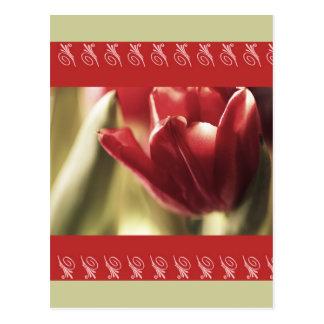 Fotografía roja del tulipán, capítulo detallado ro postales
