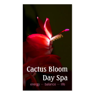 Fotografía rosada de la floración de los cactus de tarjetas de visita