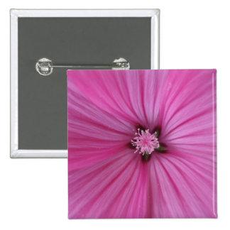 Fotografía rosada de la macro del ~ de la correhue pin cuadrado