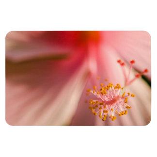 Fotografía rosada de la macro del estambre de la f imán