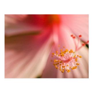 Fotografía rosada de la macro del estambre de la tarjeta postal
