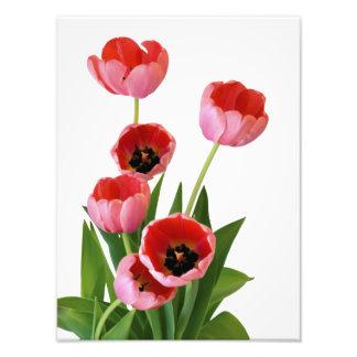 Fotografía rosada del ramo del tulipán de la fotos