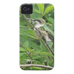 Fotografía Rubí-Throated del colibrí iPhone 4 Case-Mate Fundas
