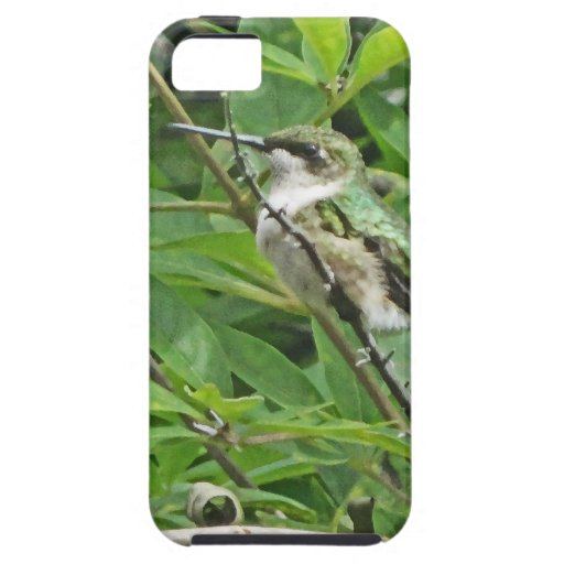 Fotografía Rubí-Throated del colibrí iPhone 5 Carcasa
