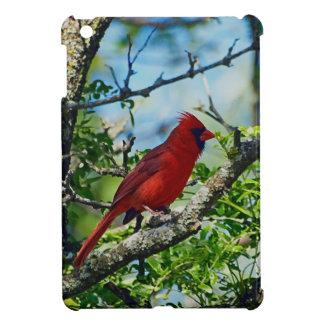 Fotografía salvaje cardinal roja del pájaro iPad mini protectores