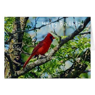 Fotografía salvaje cardinal roja del pájaro tarjeta de felicitación