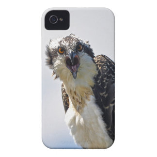 Fotografía Screeching de la fauna de Osprey Case-Mate iPhone 4 Protectores